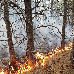 Creating Jobs While Focusing of Wildfire Reduction