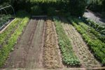 Young Agrarians Hire Basin Coordinator