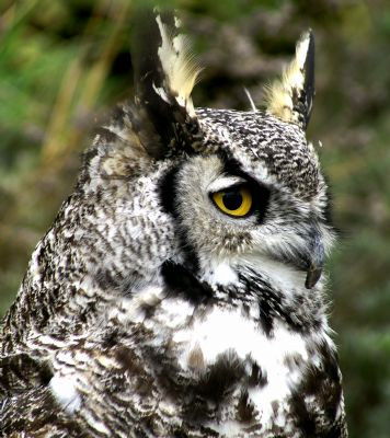 The Slocan Western Screech Owl Habitat Protection and Interpretation Project is one of 37 projects receiving support through Columbia Basin Trust's Environmental Initiatives Program.